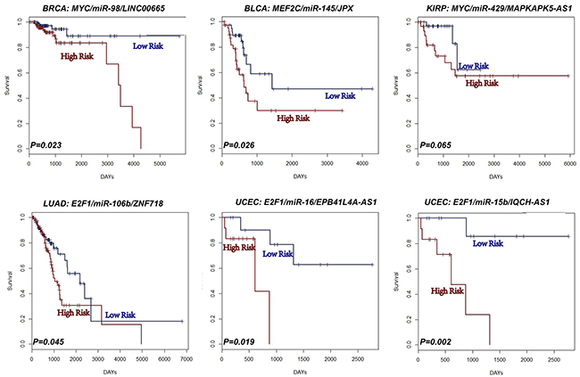 L-FFL motifs are potential prognostic biomarkers for cancers.