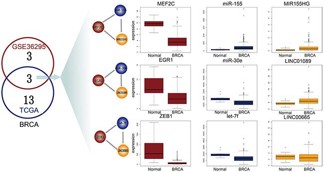 Common L-FFL motifs between microarray and RNA-seq data.