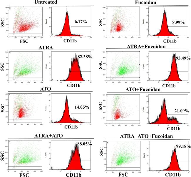 Representative cell differentiation assay.
