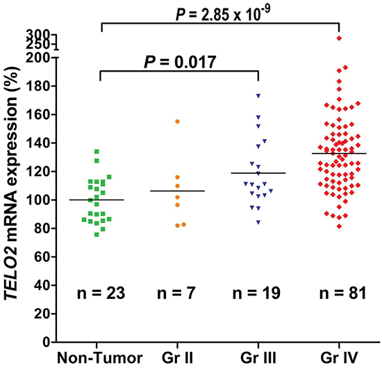 Human high-grade gliomas increase TELO2 mRNA expression.