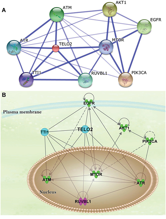 The protein-protein interaction (PPI) network and ingenuity pathway analysis (IPA).