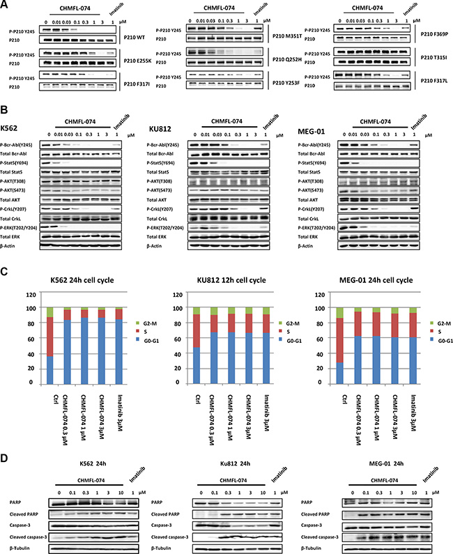 CHMFL-074's anti-colony formation effects against intact cancer cell lines and anti-proliferative effect against CML patient primary cells.