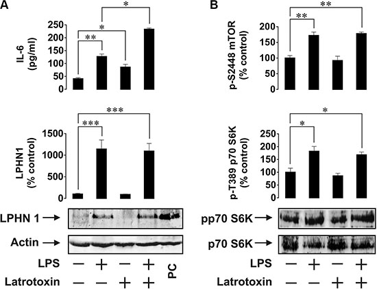 Expression and activity of LPHN1 in U937 human ML cells.