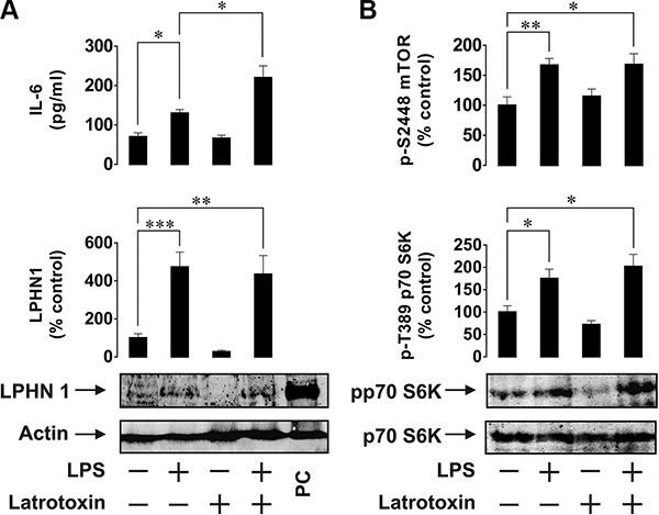 Effects of LPS and LTX on LPHN1 expression, IL-6 exocytosis and mTOR activity in THP-1 human ML cells.