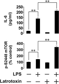 Effects of LPS and LTX on IL-6 exocytosis and mTOR activity in primary human AML cells.