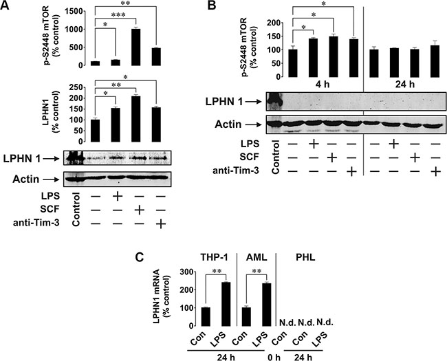 Primary human AML cells but not healthy primary human leukocytes express LPHN1.