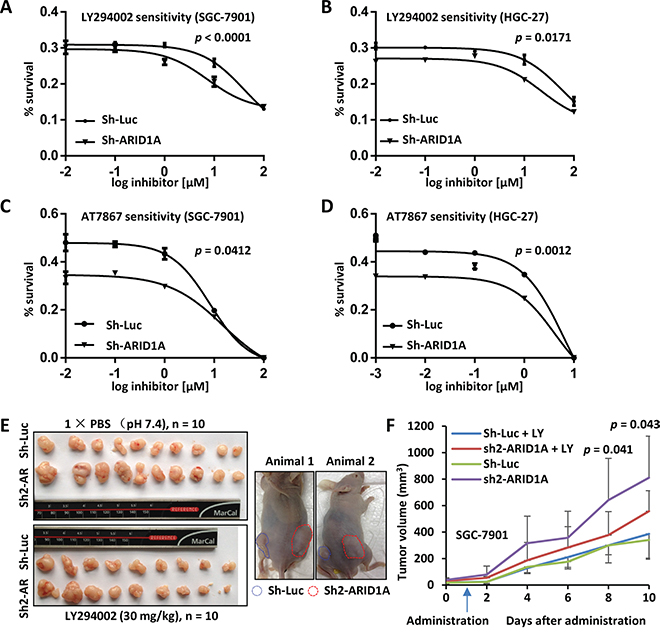 In vitro and in vivo drug sensitivity analyses of GC cells with ARID1A-depletion.