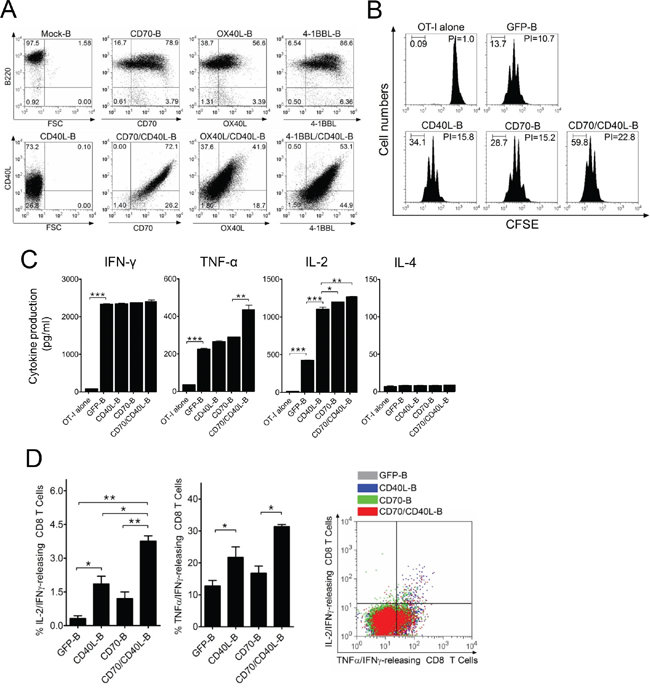 B-cells expressing additional costimulatory ligands stimulate antigen-specific CD8 T-cells in vitro.