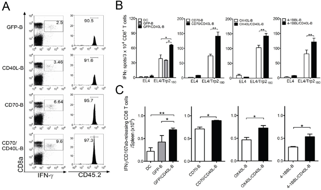 Co-expression of CD40L on ex vivo-activated B-cells along with additional costimulatory ligands elicits enhanced CD8 T-cell responses in vivo.