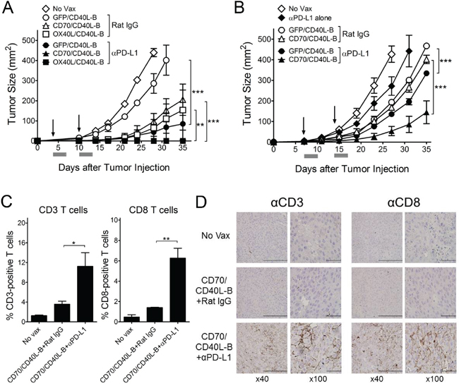PD-1 blockade enhance the therapeutic efficacy of ex vivo-generated B-cell vaccines.