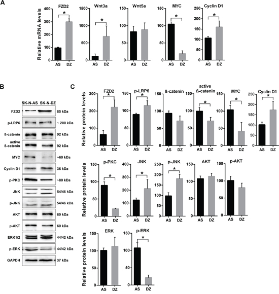 Characterization of gene expression in MYCN-unamplified SK-N-AS and MYCN-amplified SK-N-DZ NB cells.