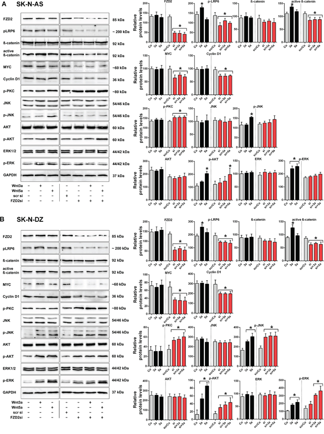 Wnt3a and Wnt5a signal via FZD2 in NB cell lines.