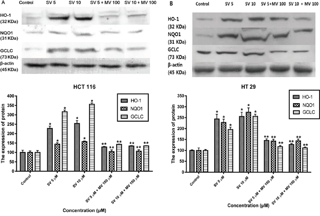 Simvastatin induces transcriptional activation of HO-1, NQO1, and GCLC.