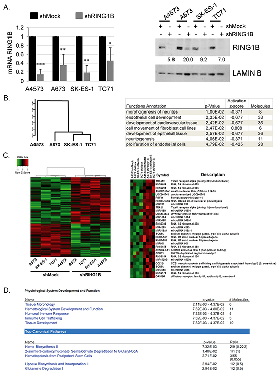 Characterization of the transcriptome in RING1B-depleted ES cells.