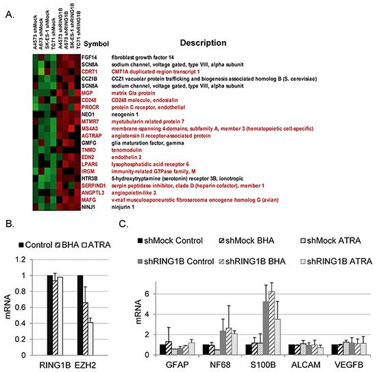 RING1B depletion does not result in global alterations of developmental transcription programs in ES cells.