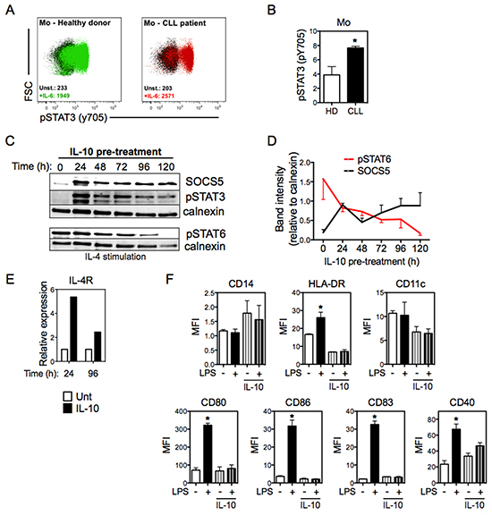 IL-10 induces the expression of both SOCS5 and IL-4Rα.