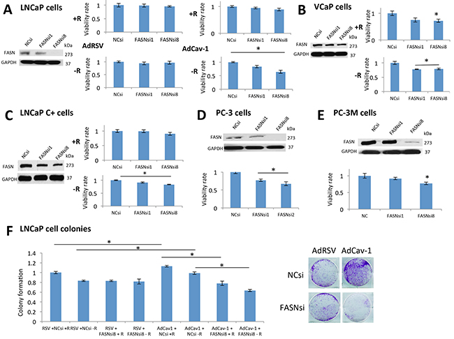 FASN was critical for the survival of PCa cells expressing Cav-1 under androgen deprivation, mediating its growth and resistance effects.