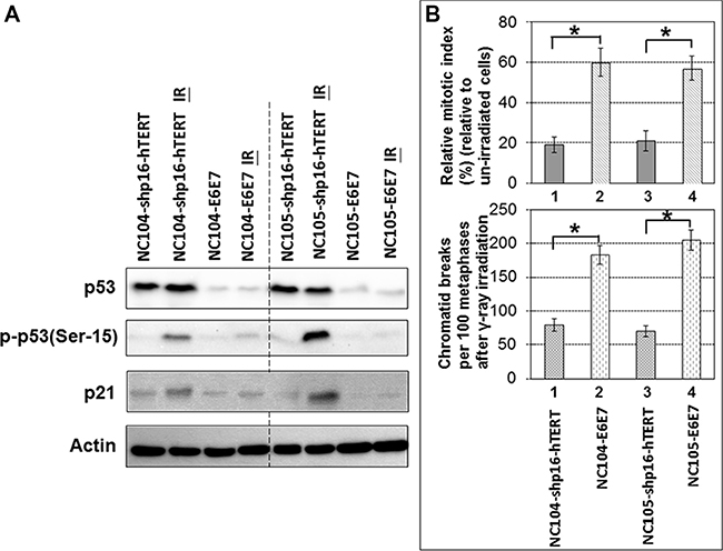 Response of p53 and p21 to ionizing radiation and G2 checkpoint function analysis in shp16-hTERT-immortalized and HPV16-E6E7-immortalized cervical epithelial cell lines.