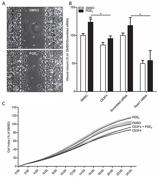 Role of Epac1 in PGE2-induced cell migration of A549 cells.