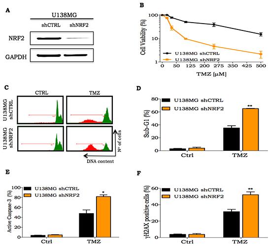 Cellular response of NRF2 silenced cells to TMZ treatment.