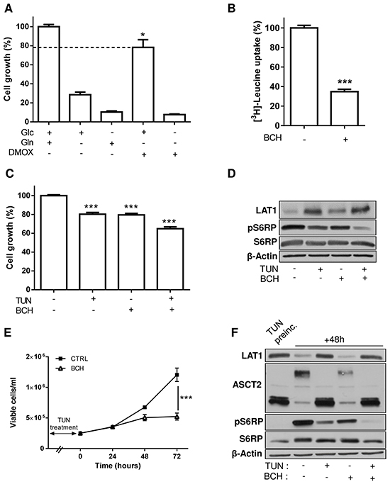 Inhibition of LAT1 increases the growth inhibitory effects resulting from alterations in the glycosylation process.