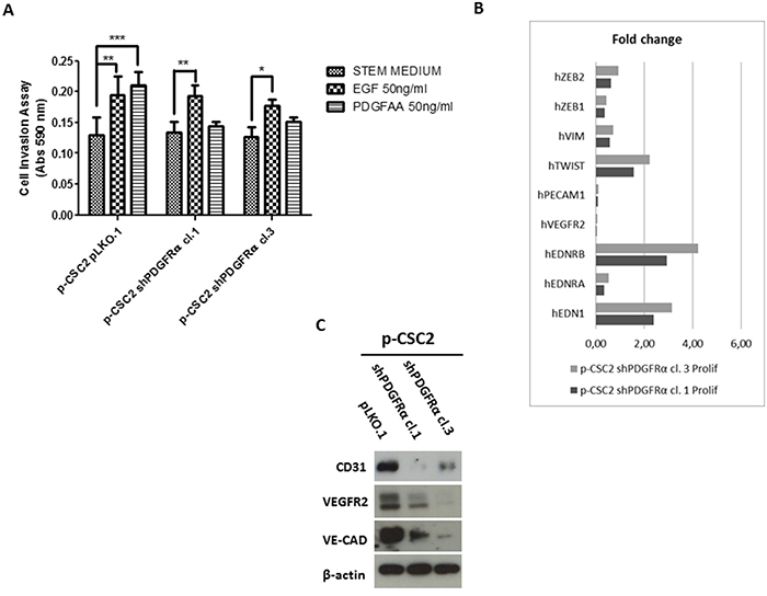 shPDGFRα-CSC clones display a significant reduction of invasiveness and angiogenesis compared to pLKO.1.