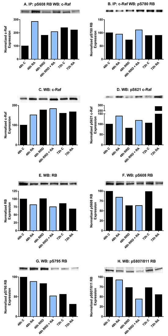 RA and RRD-251 promote transient changes in the c-Raf-RB interaction and their specific phosphorylation.
