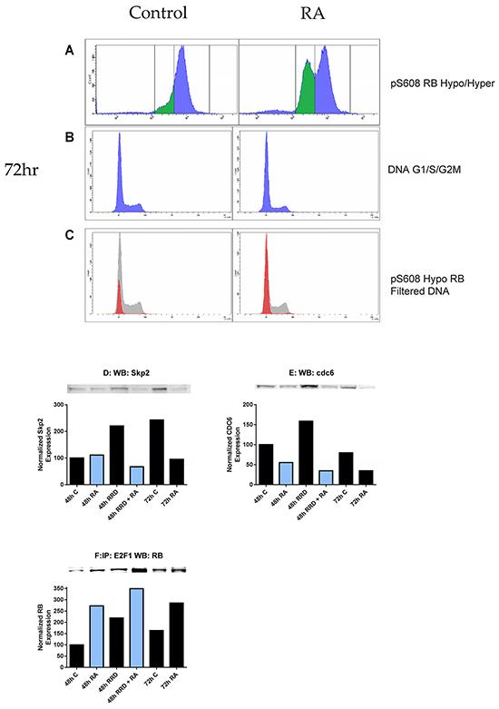 RB serine 608 phosphorylation corresponds to G0/G1.