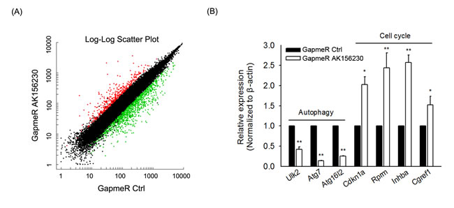 Gene expression signature induced by AK156230 silencing.