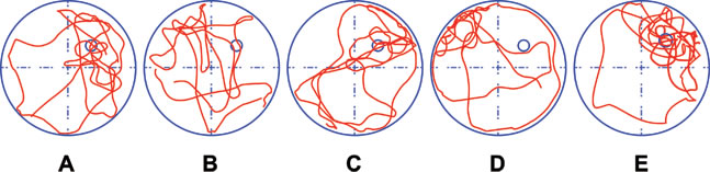 The motion curves of rats in the spatial probe test (SPT) of rats in the five groups.