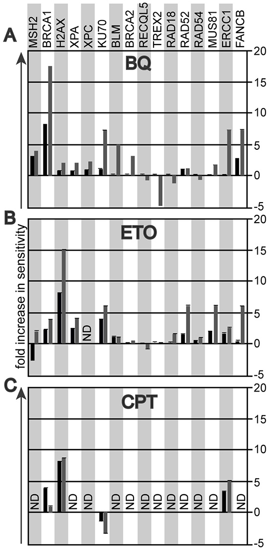 The genotoxic profile that compares the survival fraction of mutant ES cells to their parental controls at 10% (black bar) and at 1% (grey bar) cell survival.