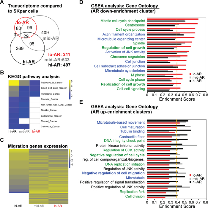 Systems biological analysis revealed that AR-mediated reprogramming of the transcriptome suppressed the expression of migration-related gene clusters.