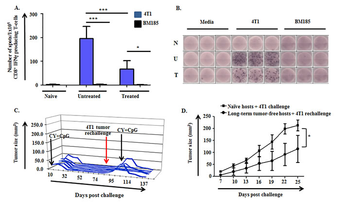 4T1-specific IFNγ-producing cells are induced in untreated and CY+TLRa-treated 4T1 TB mice, giving rise to immunological memory.