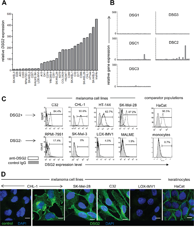 DSG2 is heterogeneously expressed by human melanoma cell lines.
