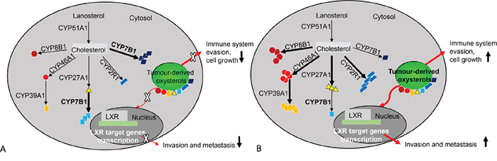 An overview of oxysterol metabolising enzymes in good and poor prognostic colorectal cancers.
