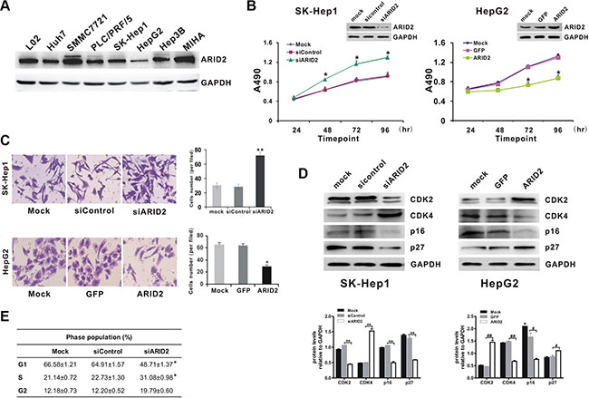Suppression of ARID2 expression promotes cell proliferation by inducing G1/S transition in hepatoma cells.