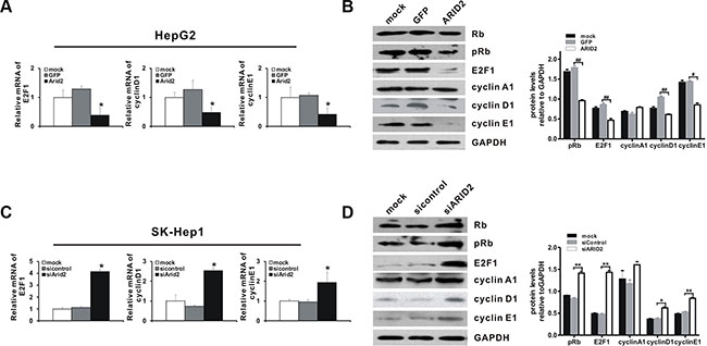ARID2 controls the expression of Rb-E2F-dependent genes.
