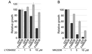 FAM83B expression confers resistance to therapeutic inhibition of the PI3K/AKT signaling pathway.