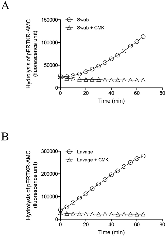 Inhibition of PC activity in endocervical swab and uterine lavage samples by a potent PC inhibitor, decanoyl–Arg-Val-Lys-Arg–chloromethylketone (CMK).