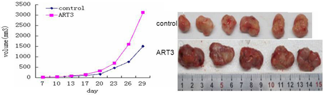 ART3 overexpression enhances mammary tumor growth in xenograft models.
