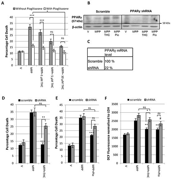 Δ9-THC and pioglitazone act through divergent pathways.