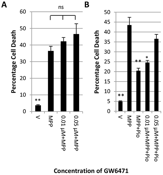 Inhibition of PPARα blocks the protective effect of pioglitazone.