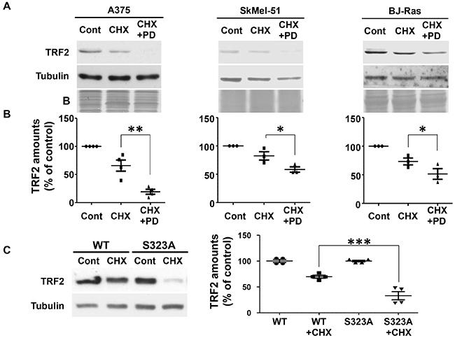 TRF2 half-life is dependent on TRF2 phosphorylation of S323 by ERK1/2.
