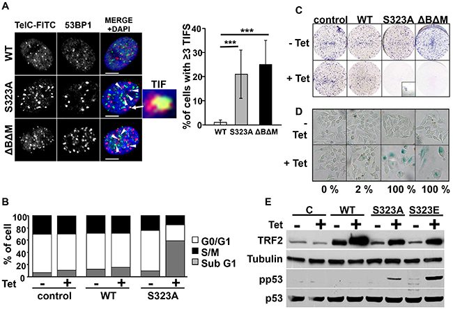 Expression of mutant forms of TRF2 induces telomere defects, apoptosis and senescence.