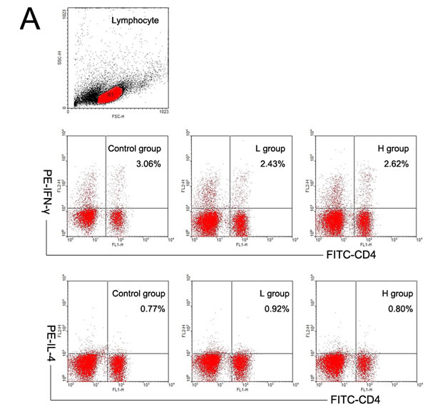 The effects of coumestrol exposure on the differentiation of splenic Th1 and Th2 subsets in female CBA/J mice after induction of EAT.