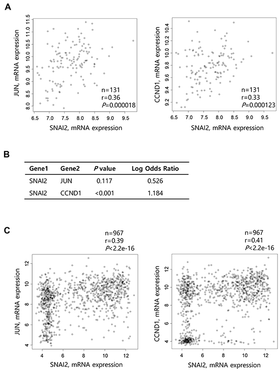 Correlation between Slug and cyclin D1 expression in prostate cancers and various cancer cell lines.