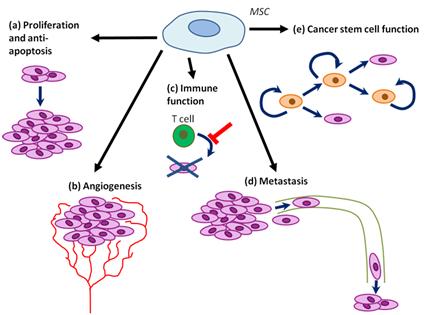 MSC tumor progression promoting functions.