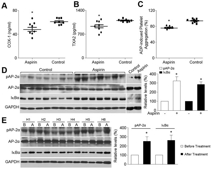 Aspirin activates AP-2α and increases IkBα protein expression in humans.