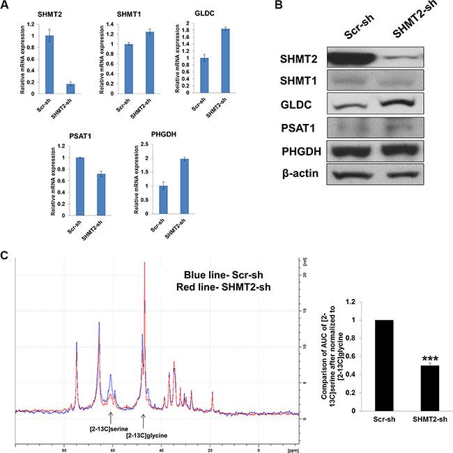 Effect of SHMT2 knockdown on serine-glycine metabolism in Huh-7 cells.