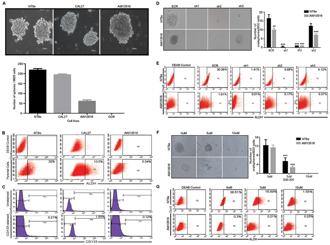 Notch pathway is essential for cancer stem-like property of HNSCC cells.